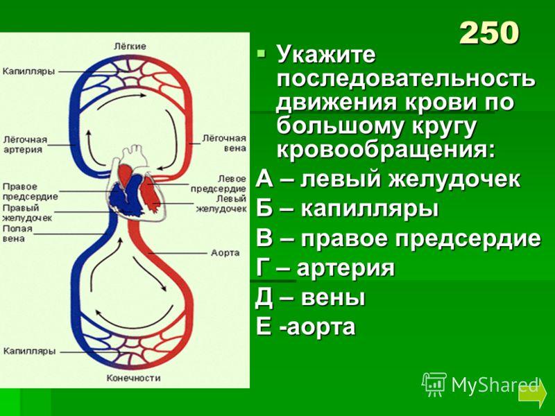 Укажите последовательность движения крови по большому кругу кровообращения: Укажите последовательность движения крови по большому кругу кровообращения: А – левый желудочек Б – капилляры В – правое предсердие Г – артерия Д – вены Е -аорта 250
