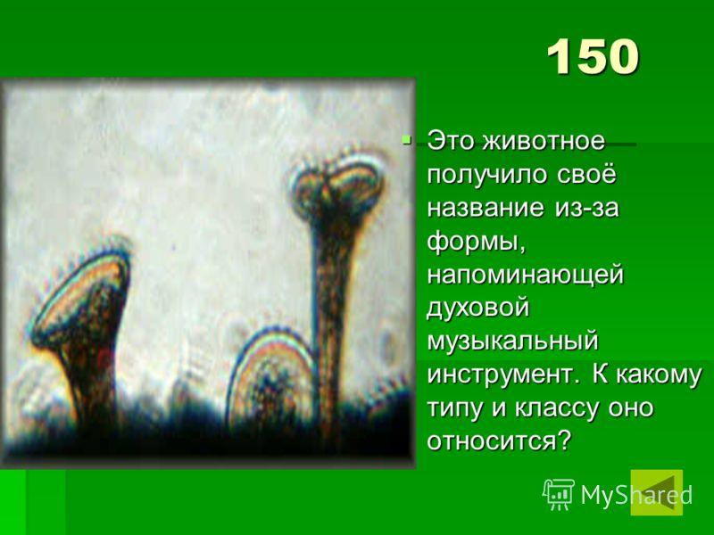 150 Это животное получило своё название из-за формы, напоминающей духовой музыкальный инструмент. К какому типу и классу оно относится? Это животное получило своё название из-за формы, напоминающей духовой музыкальный инструмент. К какому типу и клас