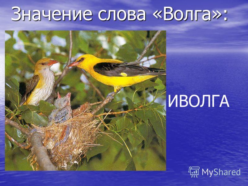 Значение слова «Волга»: : ИВОЛГА