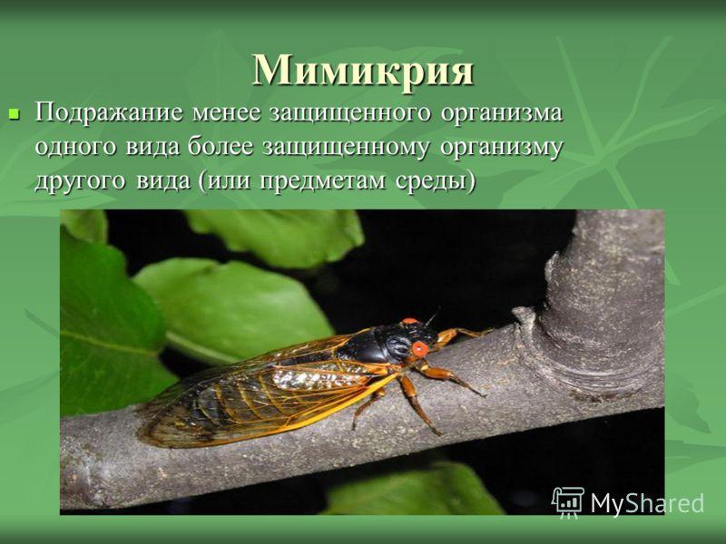 Мимикрия Подражание менее защищенного организма одного вида более защищенному организму другого вида (или предметам среды)