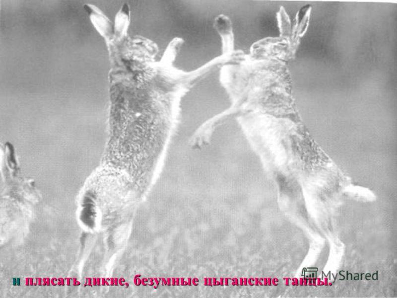 и плясать дикие, безумные цыганские танцы.