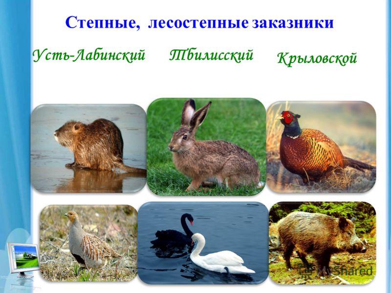 Степные, лесостепные заказники Усть-ЛабинскийТбилисский Крыловской