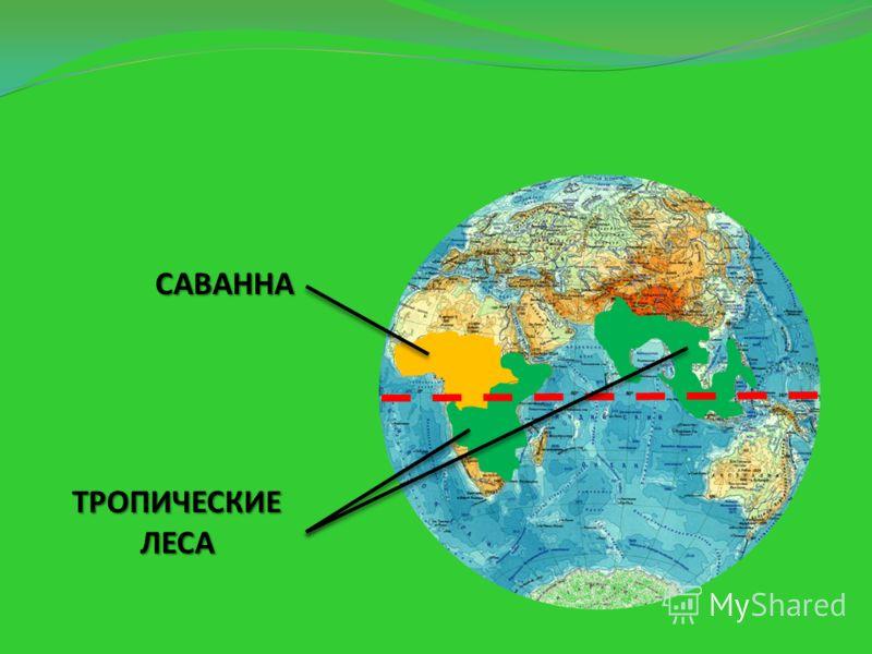 Найдите воображаемую линию экватор, по обе стороны от которого и находятся жаркие районы.