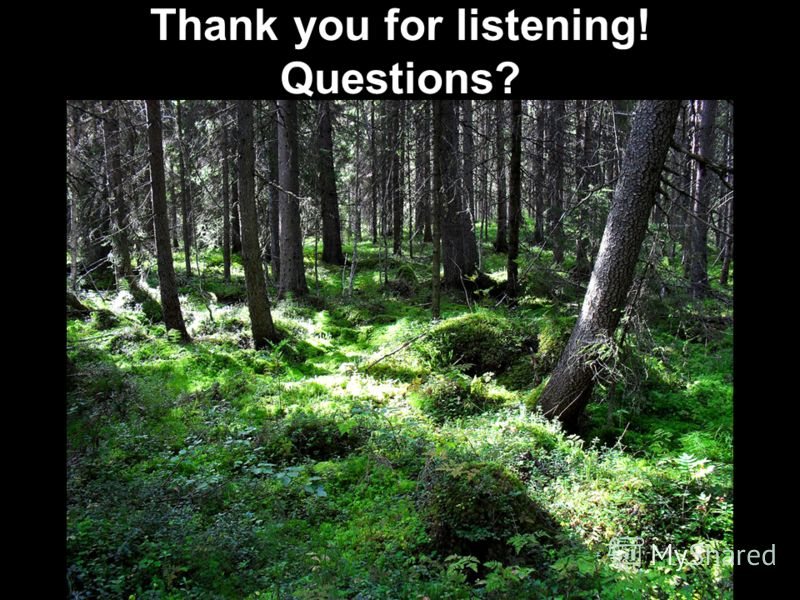 79 Thank you for listening! Questions?