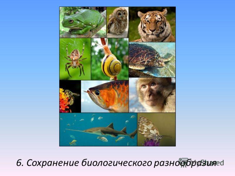 6. Сохранение биологического разнообразия