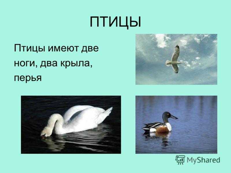 ПТИЦЫ Птицы имеют две ноги, два крыла, перья