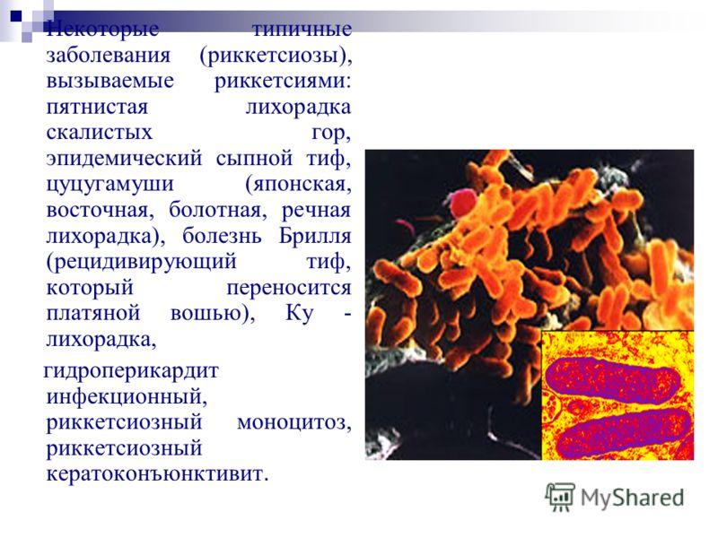 Некоторые типичные заболевания (риккетсиозы), вызываемые риккетсиями: пятнистая лихорадка скалистых гор, эпидемический сыпной тиф, цуцугамуши (японская, восточная, болотная, речная лихорадка), болезнь Брилля (рецидивирующий тиф, который переносится п
