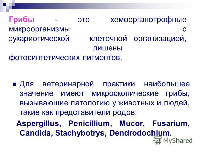 Грибы - это хемоорганотрофные микроорганизмы с эукариотическойклеточной организацией, лишены фотосинтетических пигментов. Для ветеринарной практики наибольшее значение имеют микроскопические грибы, вызывающие патологию у животных и людей, такие как п