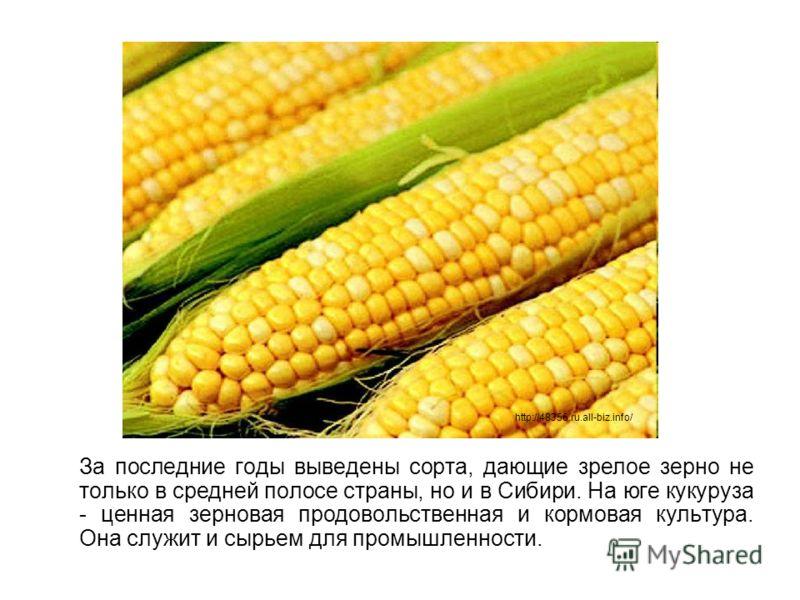 За последние годы выведены сорта, дающие зрелое зерно не только в средней полосе страны, но и в Сибири. На юге кукуруза - ценная зерновая продовольственная и кормовая культура. Она служит и сырьем для промышленности. http://48356.ru.all-biz.info/