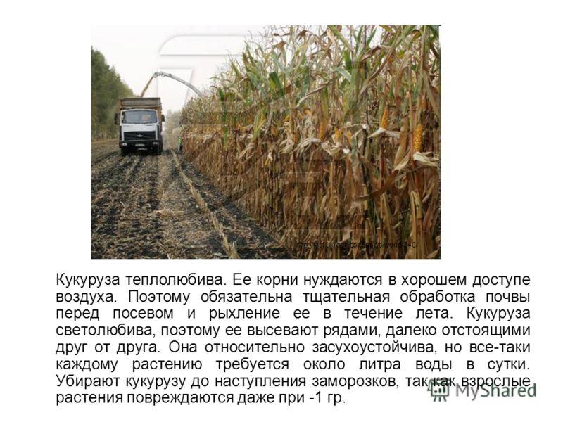 Кукуруза теплолюбива. Ее корни нуждаются в хорошем доступе воздуха. Поэтому обязательна тщательная обработка почвы перед посевом и рыхление ее в течение лета. Кукуруза светолюбива, поэтому ее высевают рядами, далеко отстоящими друг от друга. Она отно
