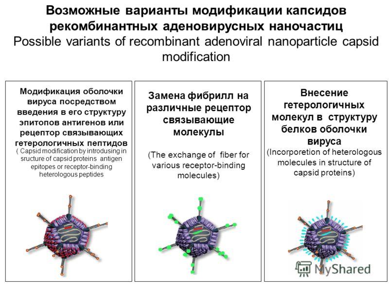 Внесение гетерологичных молекул в структуру белков оболочки вируса (Incorporetion of heterologous molecules in structure of capsid proteins) Возможные варианты модификации капсидов рекомбинантных аденовирусных наночастиц Possible variants of recombin