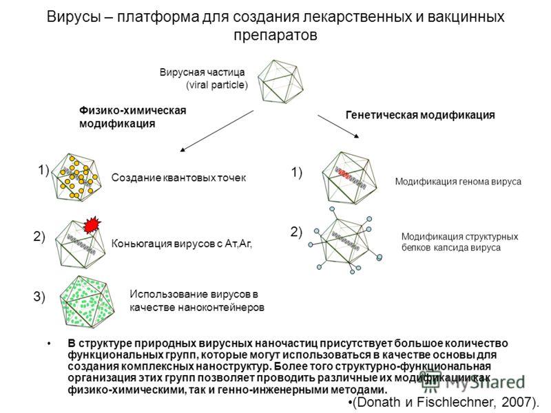 Вирусы – платформа для создания лекарственных и вакцинных препаратов В структуре природных вирусных наночастиц присутствует большое количество функциональных групп, которые могут использоваться в качестве основы для создания комплексных наноструктур.