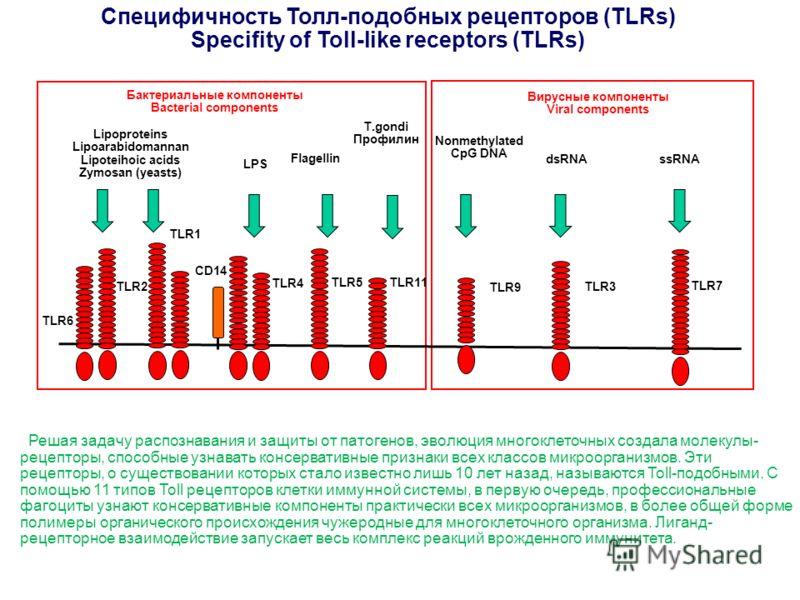 Специфичность Толл-подобных рецепторов (TLRs) Specifity of Toll-like receptors (TLRs) Lipoproteins Lipoarabidomannan Lipoteihoic acids Zymosan (yeasts) LPS Flagellin T.gondi Профилин Nonmethylated CpG DNA dsRNAssRNA Бактериальные компоненты Bacterial