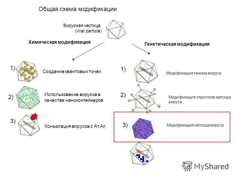 Общая схема модификации Химическая модификация Использование вирусов в качестве наноконтейнеров Коньюгация вирусов с Ат,Аг, 1) 2) 3) Создание квантовых точек Генетическая модификация 1) 2) 3) Вирусная частица (viral particle) Модификация генома вирус