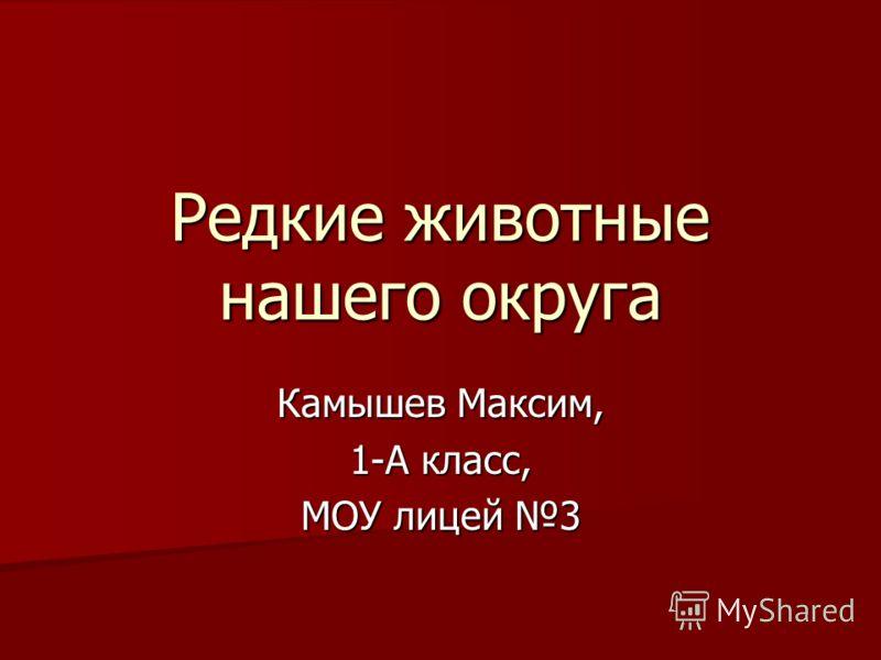 Редкие животные нашего округа Камышев Максим, 1-А класс, МОУ лицей 3