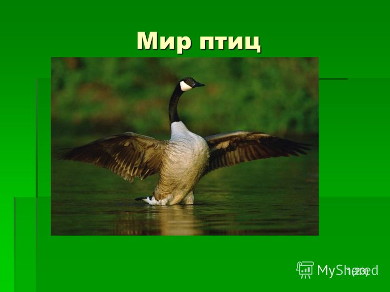 Мир птиц 1(23)