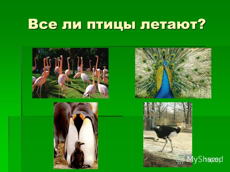 Все ли птицы летают? 15(23)