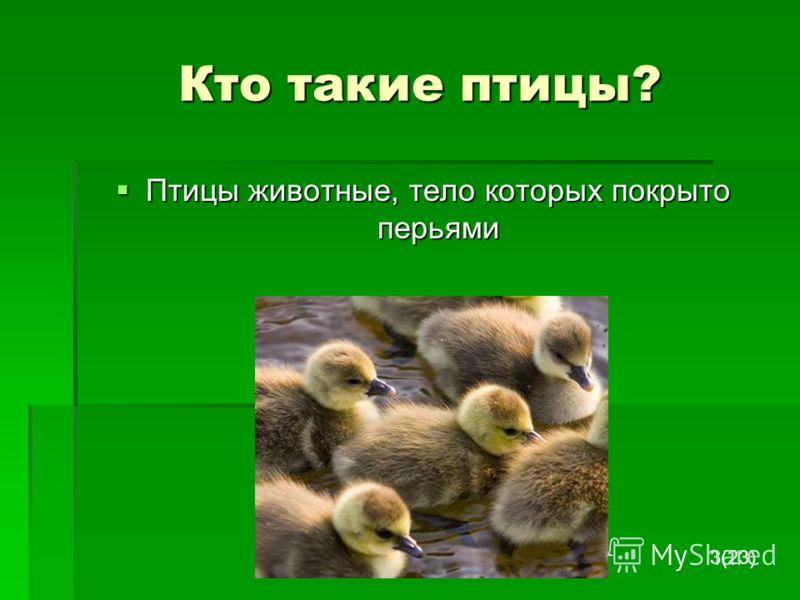 Кто такие птицы? Кто такие птицы? Птицы животные, тело которых покрыто перьями Птицы животные, тело которых покрыто перьями 3(23)