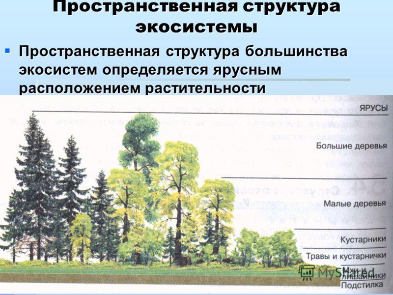 Пространственная структура экосистемы Пространственная структура большинства экосистем определяется ярусным расположением растительности Пространственная структура большинства экосистем определяется ярусным расположением растительности