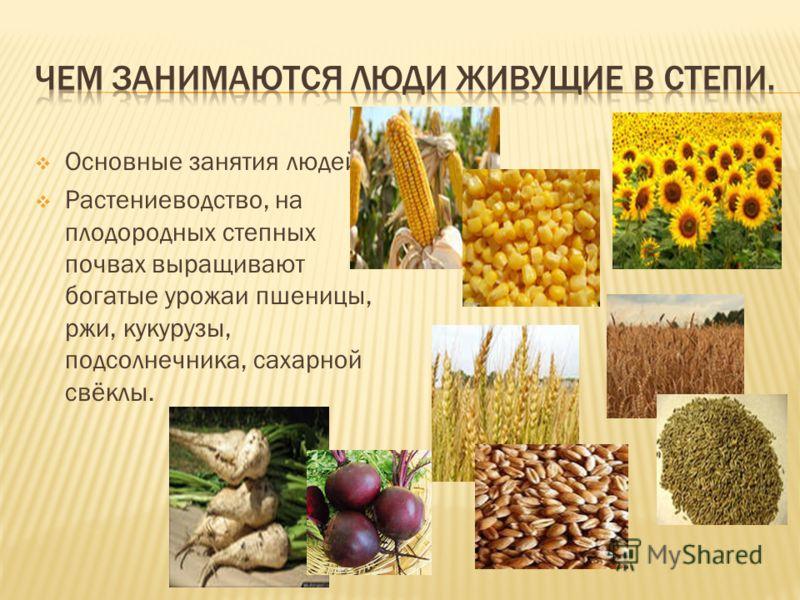 Основные занятия людей: Растениеводство, на плодородных степных почвах выращивают богатые урожаи пшеницы, ржи, кукурузы, подсолнечника, сахарной свёклы.