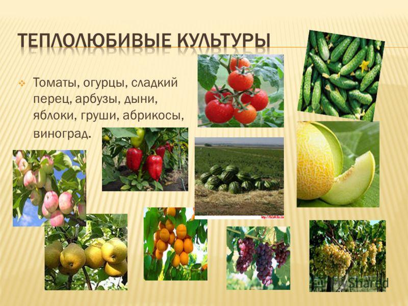 Томаты, огурцы, сладкий перец, арбузы, дыни, яблоки, груши, абрикосы, виноград.