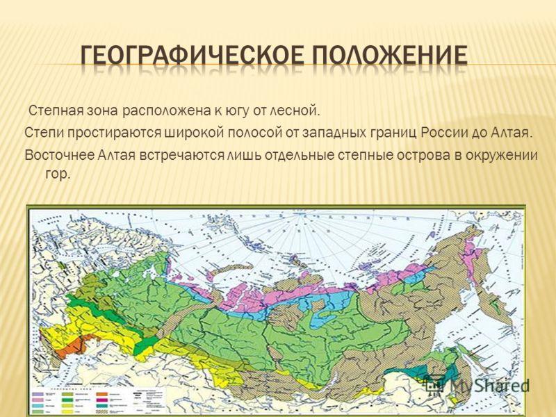 Степная зона расположена к югу от лесной. Степи простираются широкой полосой от западных границ России до Алтая. Восточнее Алтая встречаются лишь отдельные степные острова в окружении гор.