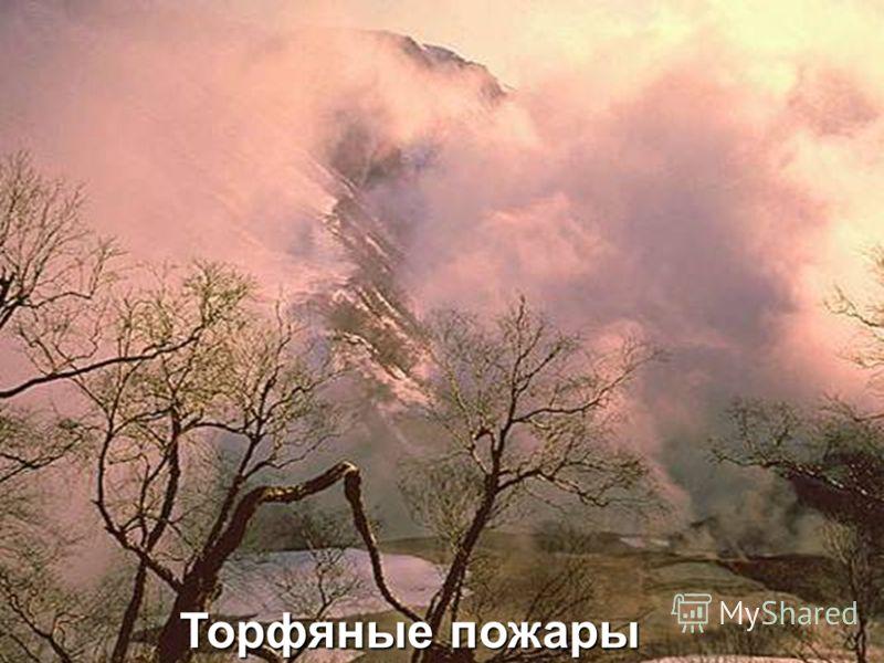 Торфяные пожары