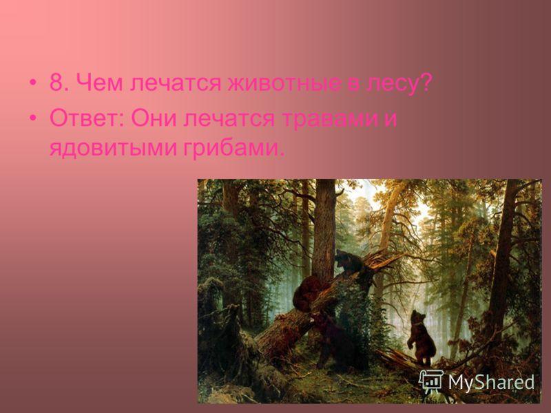 8. Чем лечатся животные в лесу? Ответ: Они лечатся травами и ядовитыми грибами.