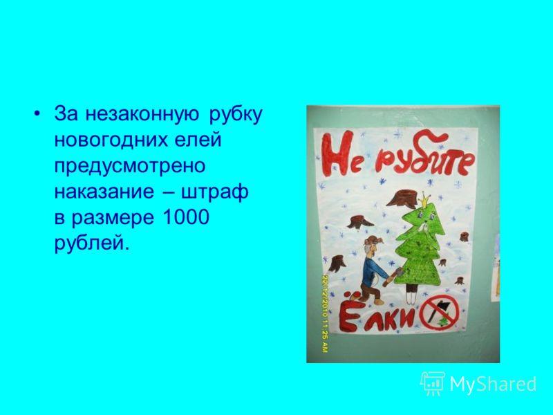 За незаконную рубку новогодних елей предусмотрено наказание – штраф в размере 1000 рублей.