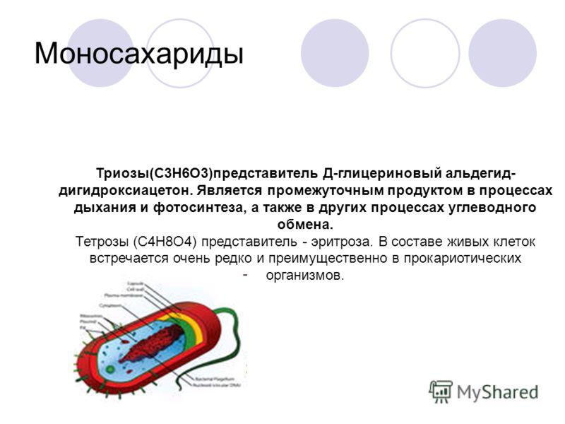 Моносахариды Триозы(С3Н6О3)представитель Д-глицериновый альдегид- дигидроксиацетон. Является промежуточным продуктом в процессах дыхания и фотосинтеза, а также в других процессах углеводного обмена. Тетрозы (С4Н8О4) представитель - эритроза. В состав