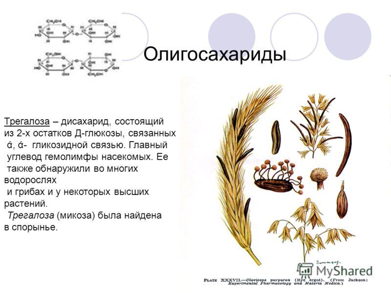 Олигосахариды Трегалоза – дисахарид, состоящий из 2-х остатков Д-глюкозы, связанных ά, ά- гликозидной связью. Главный углевод гемолимфы насекомых. Ее также обнаружили во многих водорослях и грибах и у некоторых высших растений. Трегалоза (микоза) был