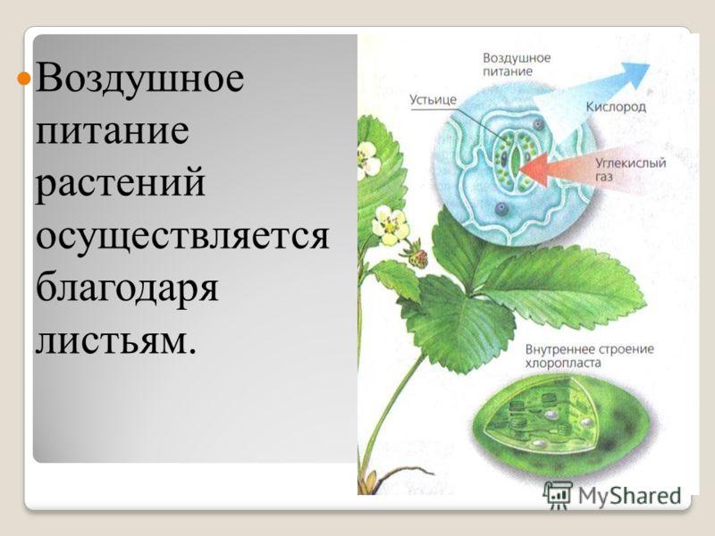 Воздушное питание растений