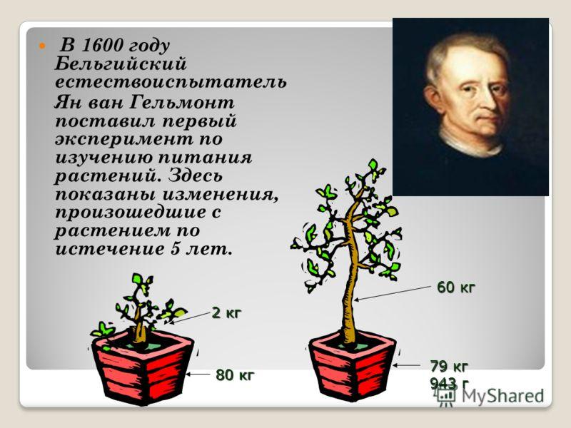 В 1600 году Бельгийский естествоиспытатель Ян ван Гельмонт поставил первый эксперимент по изучению питания растений. Здесь показаны изменения, произошедшие с растением по истечение 5 лет. 80 кг 2 кг 79 кг 943 г 60 кг
