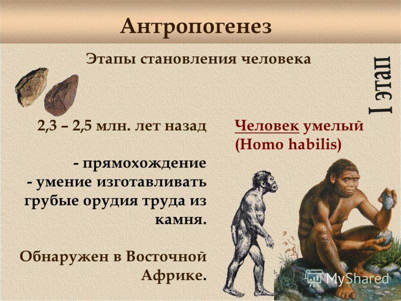 Антропогенез Этапы становления человека 2,3 – 2,5 млн. лет назад - прямохождение - умение изготавливать грубые орудия труда из камня. Обнаружен в Восточной Африке. Человек умелый (Homo habilis)