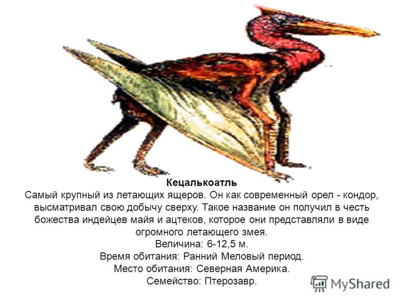 Кецалькоатль Самый крупный из летающих ящеров. Он как современный орел - кондор, высматривал свою добычу сверху. Такое название он получил в честь божества индейцев майя и ацтеков, которое они представляли в виде огромного летающего змея. Величина: 6