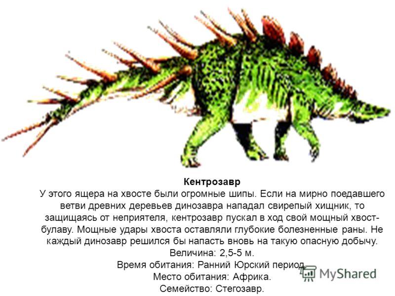 Кентрозавр У этого ящера на хвосте были огромные шипы. Если на мирно поедавшего ветви древних деревьев динозавра нападал свирепый хищник, то защищаясь от неприятеля, кентрозавр пускал в ход свой мощный хвост- булаву. Мощные удары хвоста оставляли глу