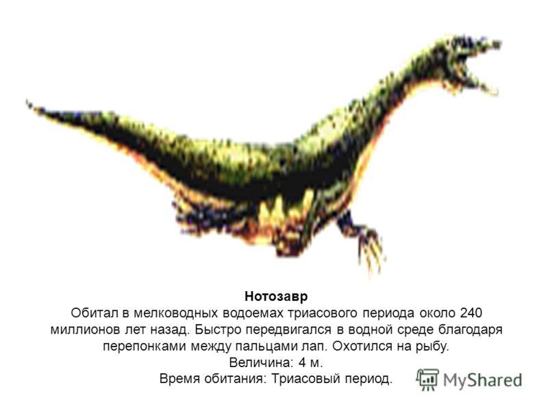 Нотозавр Обитал в мелководных водоемах триасового периода около 240 миллионов лет назад. Быстро передвигался в водной среде благодаря перепонками между пальцами лап. Охотился на рыбу. Величина: 4 м. Время обитания: Триасовый период.