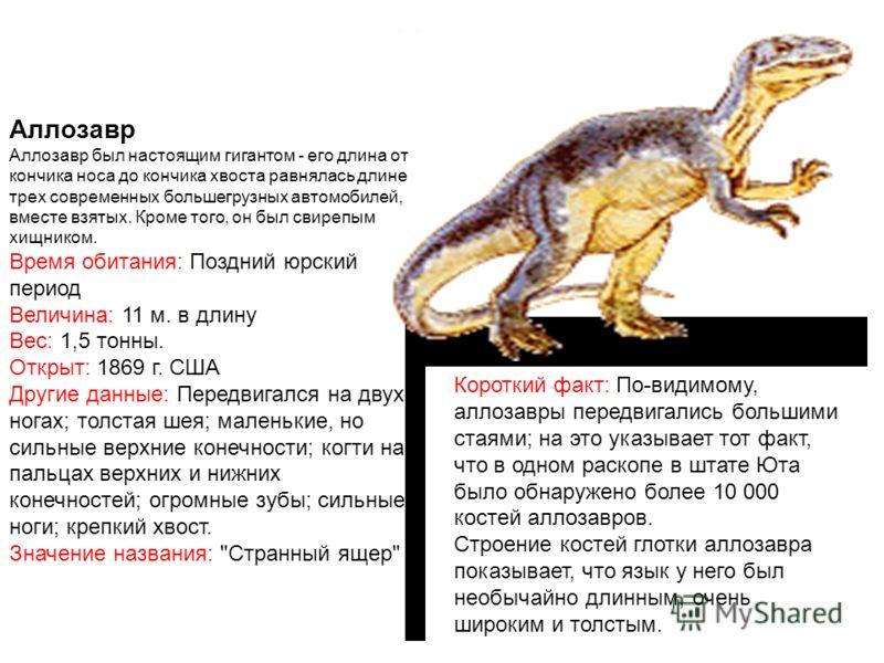 Аллозавр Аллозавр был настоящим гигантом - его длина от кончика носа до кончика хвоста равнялась длине трех современных большегрузных автомобилей, вместе взятых. Кроме того, он был свирепым хищником. Время обитания: Поздний юрский период Величина: 11