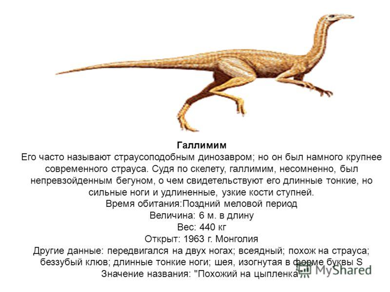 Галлимим Его часто называют страусоподобным динозавром; но он был намного крупнее современного страуса. Судя по скелету, галлимим, несомненно, был непревзойденным бегуном, о чем свидетельствуют его длинные тонкие, но сильные ноги и удлиненные, узкие
