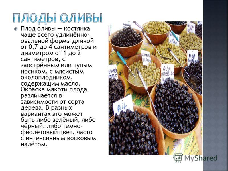 Плод оливы костянка чаще всего удлинённо- овальной формы длиной от 0,7 до 4 сантиметров и диаметром от 1 до 2 сантиметров, с заострённым или тупым носиком, с мясистым околоплодником, содержащим масло. Окраска мякоти плода различается в зависимости от