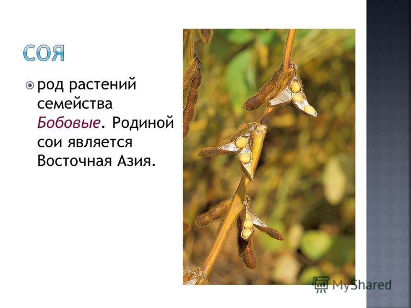 род растений семейства Бобовые. Родиной сои является Восточная Азия.