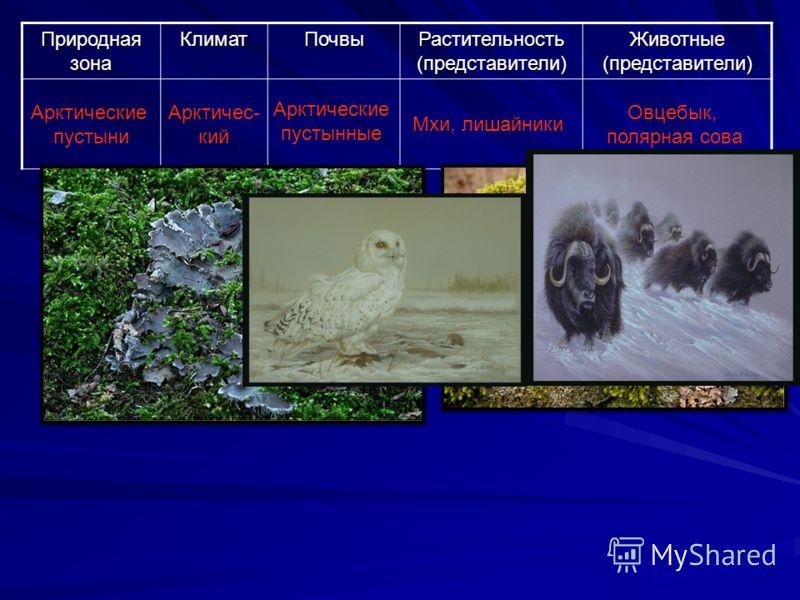 Природная зона КлиматПочвы Растительность (представители) Животные (представители) Арктические пустыни Арктичес- кий Арктические пустынные Мхи, лишайники Овцебык, полярная сова