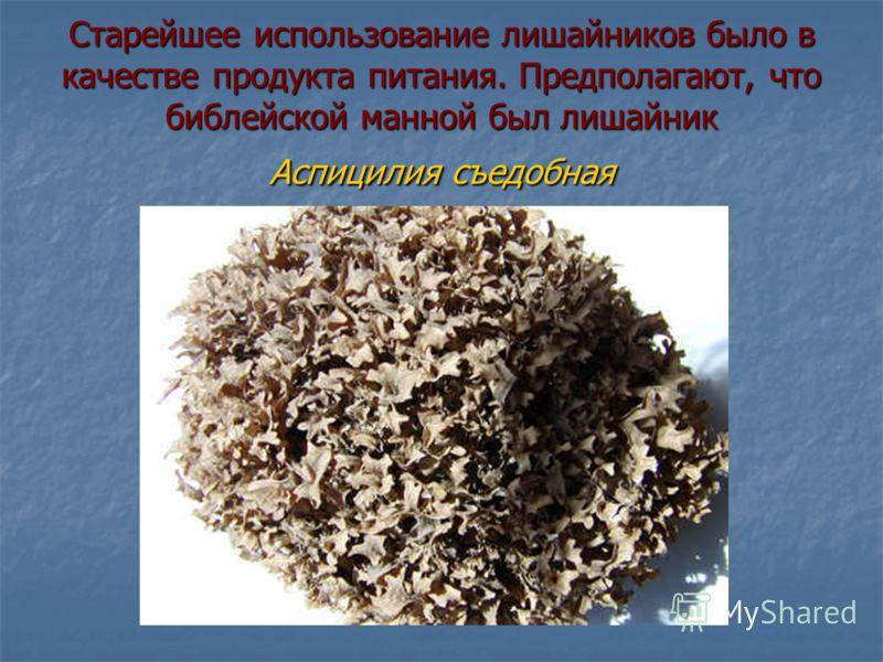 Лишайники - индикаторы загрязнения Лишайники впи- тывают все, что содержится в воз- духе и не растут в местах крайнего загрязнения. Например, Уснея бородатая растет только в очень чистых районах. Лишайники впи- тывают все, что содержится в воз- духе