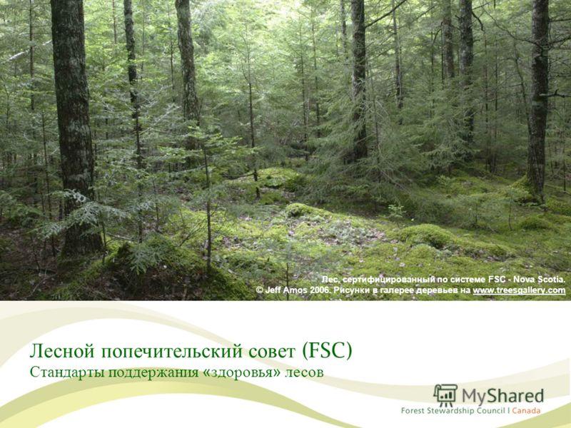 Лесной попечительский совет (FSC) Стандарты поддержания «здоровья» лесов Лес, сертифицированный по системе FSC - Nova Scotia. © Jeff Amos 2006. Рисунки в галерее деревьев на www.treesgallery.com
