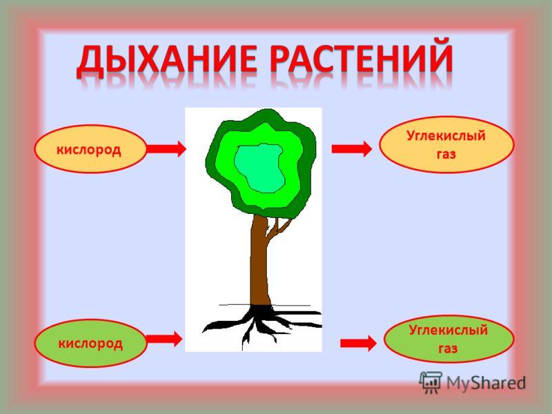 кислород Углекислый газ кислород Углекислый газ