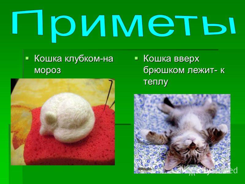 Кошка клубком-на мороз Кошка клубком-на мороз Кошка вверх брюшком лежит- к теплу Кошка вверх брюшком лежит- к теплу