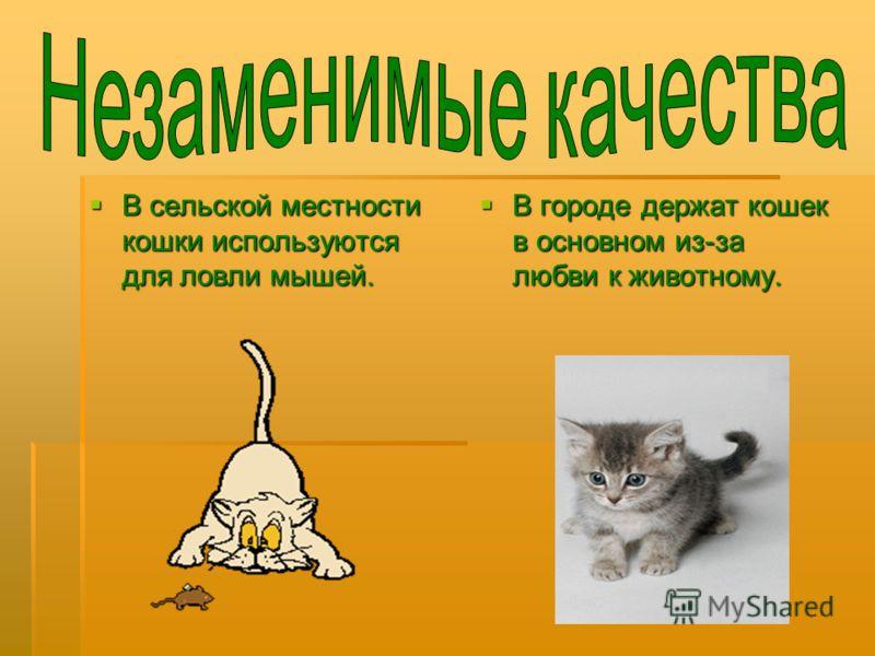 В сельской местности кошки используются для ловли мышей. В сельской местности кошки используются для ловли мышей. В городе держат кошек в основном из-за любви к животному. В городе держат кошек в основном из-за любви к животному.