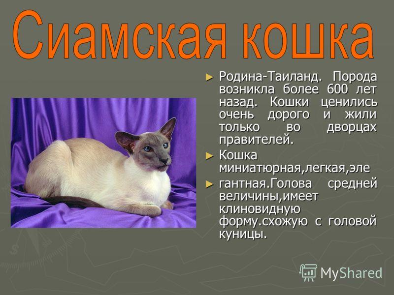 Родина-Таиланд. Порода возникла более 600 лет назад. Кошки ценились очень дорого и жили только во дворцах правителей. Кошка миниатюрная,легкая,эле гантная.Голова средней величины,имеет клиновидную форму.схожую с головой куницы.