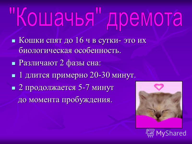 Кошки спят до 16 ч в сутки- это их биологическая особенность. Кошки спят до 16 ч в сутки- это их биологическая особенность. Различают 2 фазы сна: Различают 2 фазы сна: 1 длится примерно 20-30 минут. 1 длится примерно 20-30 минут. 2 продолжается 5-7 м