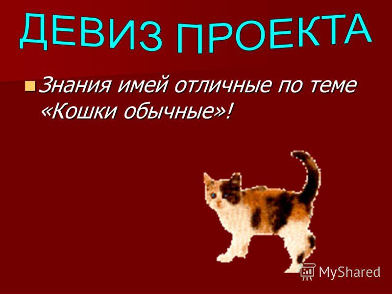 Знания имей отличные по теме «Кошки обычные»! Знания имей отличные по теме «Кошки обычные»!